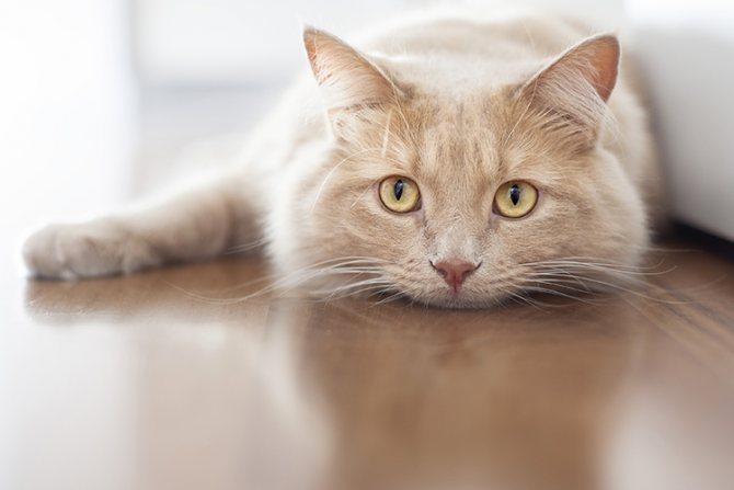 Признаки старения кошек