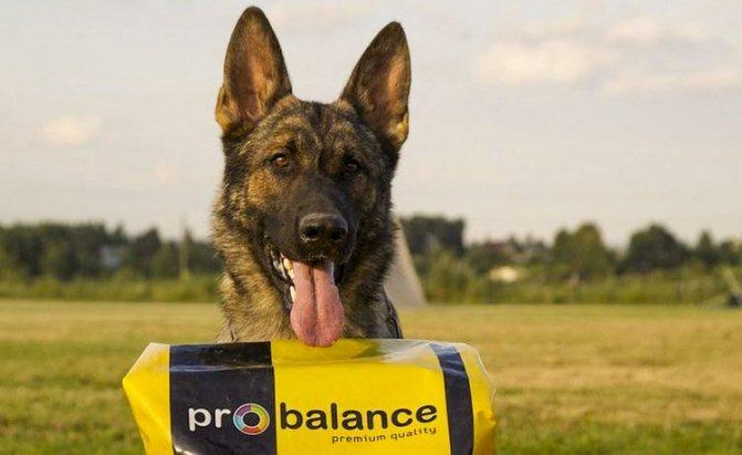 Probalance (Пробаланс) собака
