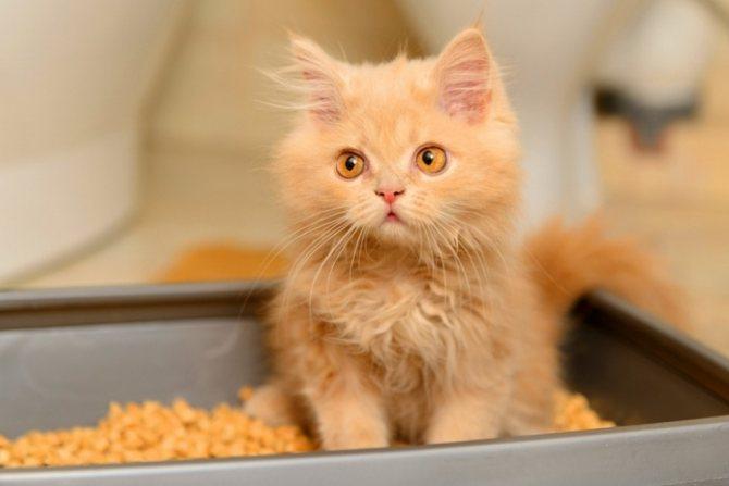 Проблемы с мочеиспусканием у кошек