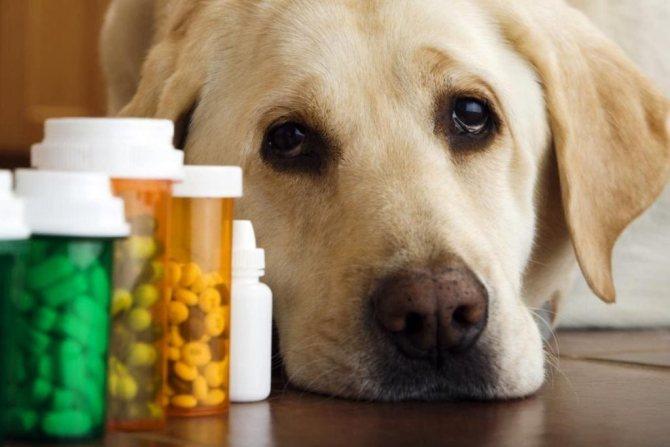 проблемы со здоровьем после того как собака съела кал