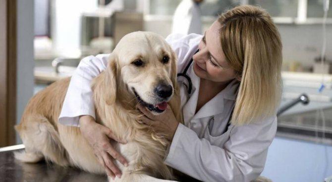 процедура кастрации собаки