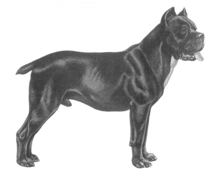 Профиль собаки