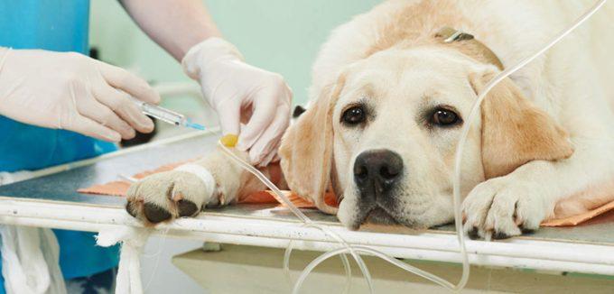 профилактические действия при лямблиозе у собак