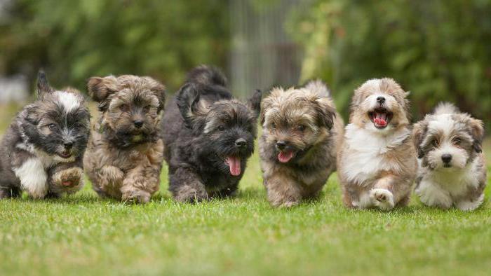 профилактика эклампсии у собак после родов