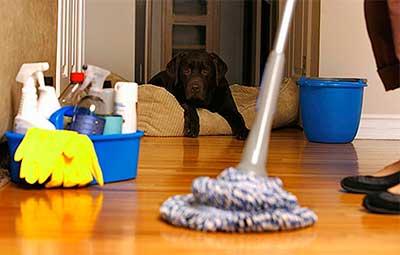 Профилактика появления блох в квартире - регулярная уборка