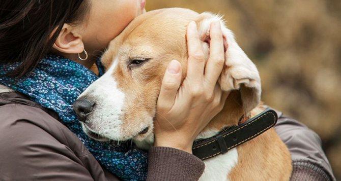 Профилактика при чумке у собак