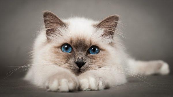 Профилактика заболеваний почек у котов