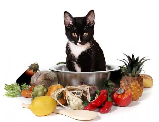 Профилактика заболевания у кошек