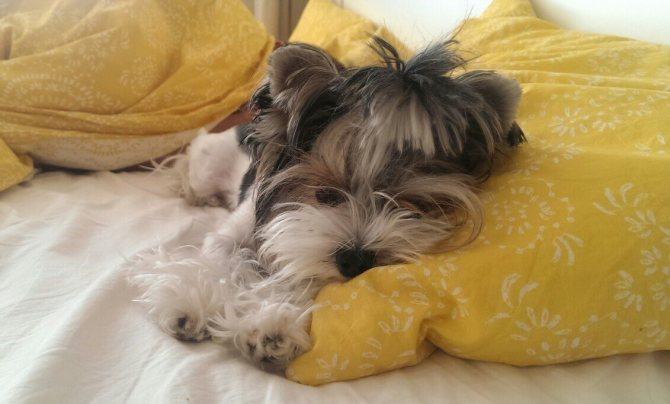 Прогнозы при эпилепсии собак