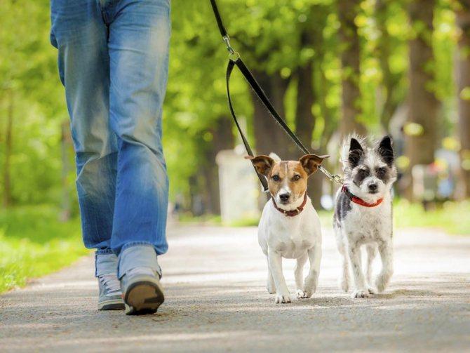Прогулка с домашними питомцами