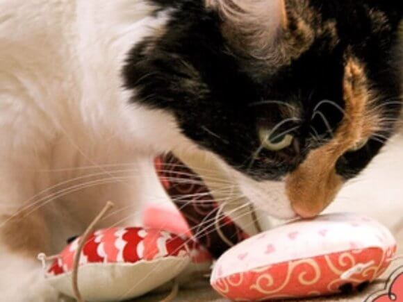 Простая игрушка для кота своими руками - мастер класс