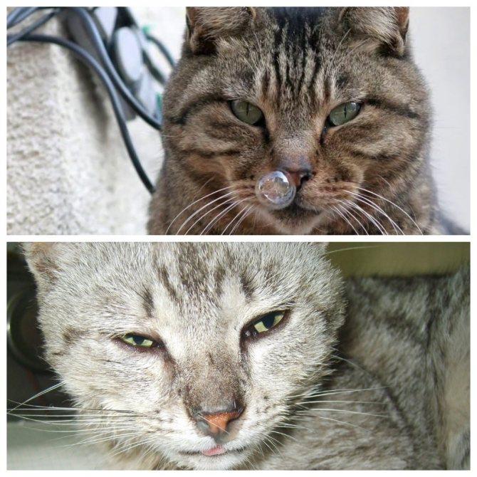 Простуда у кошек - симптомы и лечение, профилактика