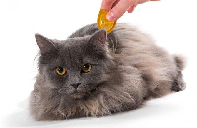 Противоблошиные капли для кота
