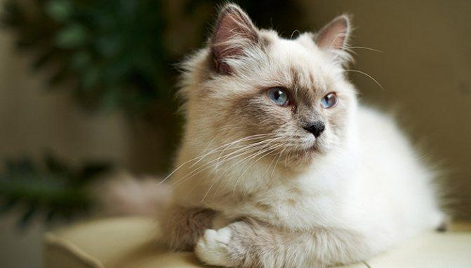 Противопоказания для кошек