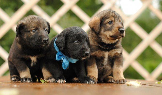 Противопоказания Стронгхолда для собак