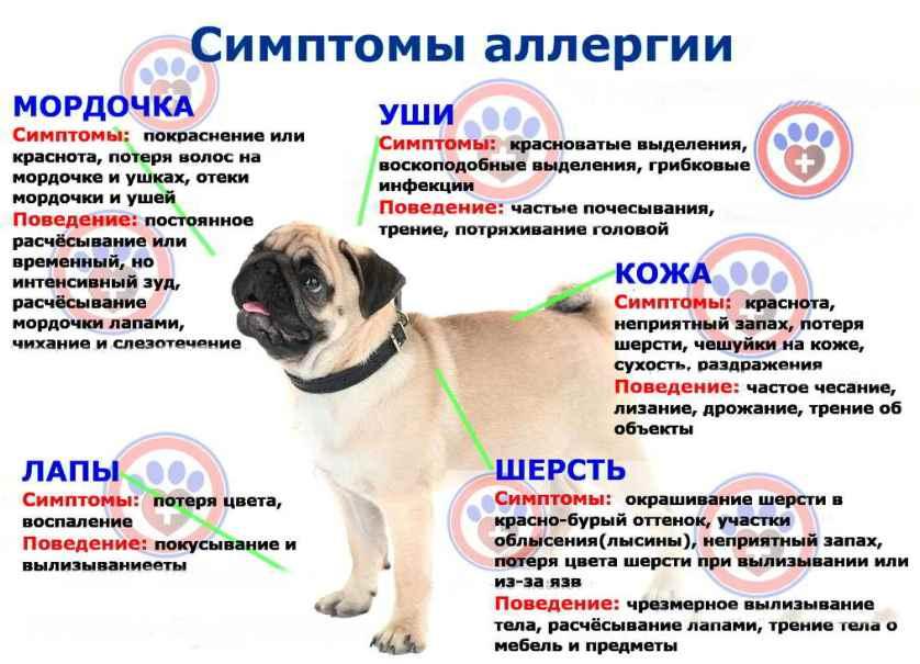 проявление аллергии на субпродукты у собак