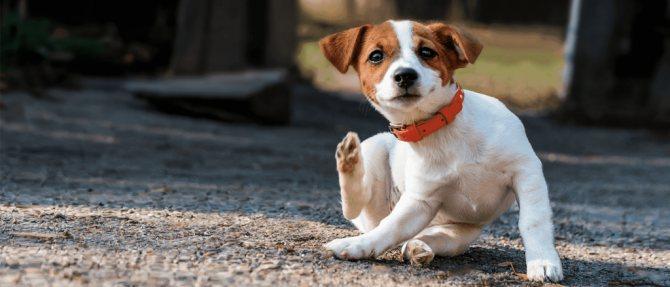 Проявления зуда у собак