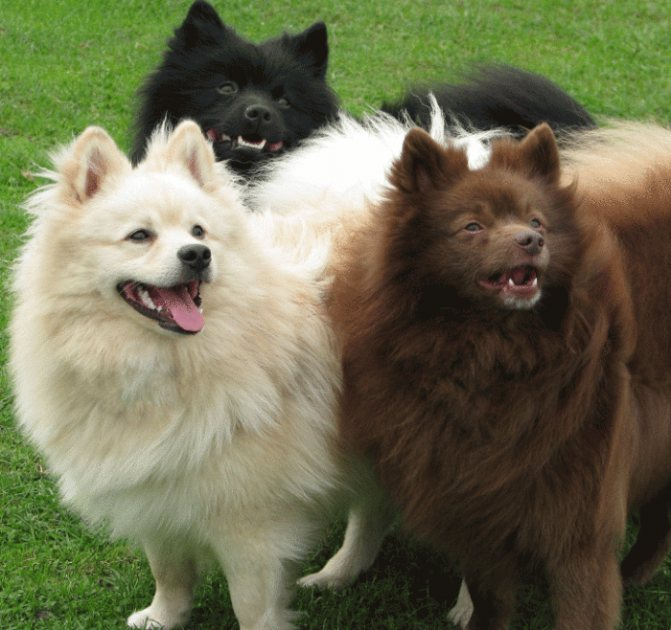 Прозвища по окрасу собаки.