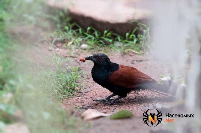 Птицы едят тараканов