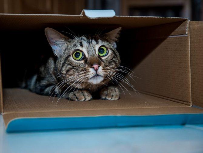 Пугливые кошки, что ж тут поделать!