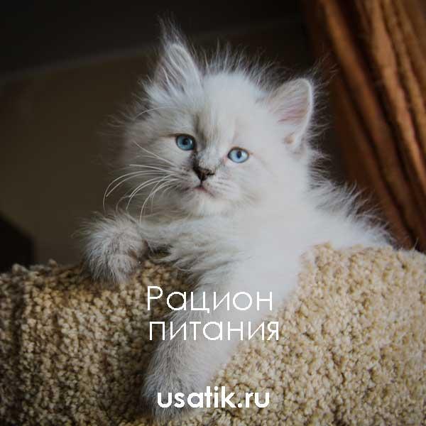 Рацион питания невских маскарадных кошек