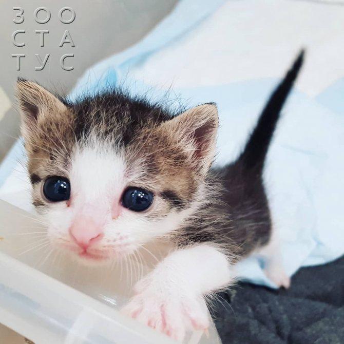 рахит и алиментарный гиперпаратиреоз у кошек и собак