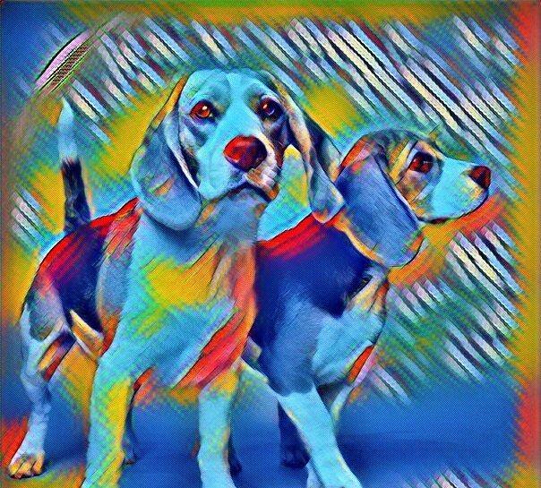 Рахит у собак