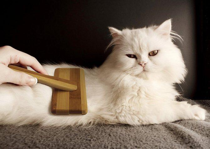 Расческа для кошек, щетка, перчатка для вычесывания шерсти, фурминатор: как хорошо вычесать питомца?