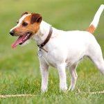 Распространенная порода собак
