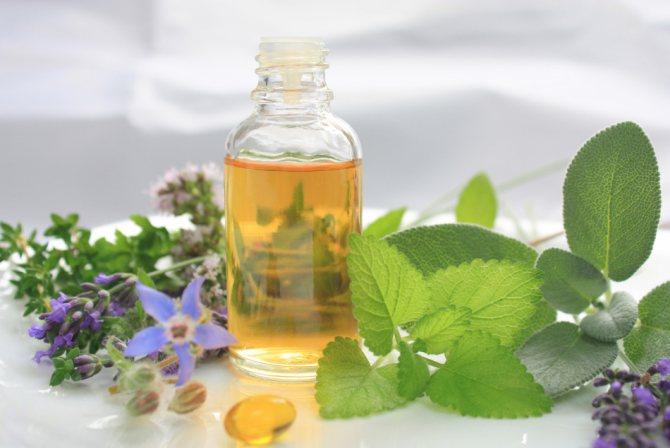 Растения семейства яснотковых - источник эфирных масел для организма