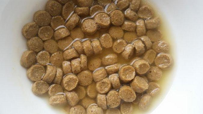 ], размачивать ли сухой корм для щенка