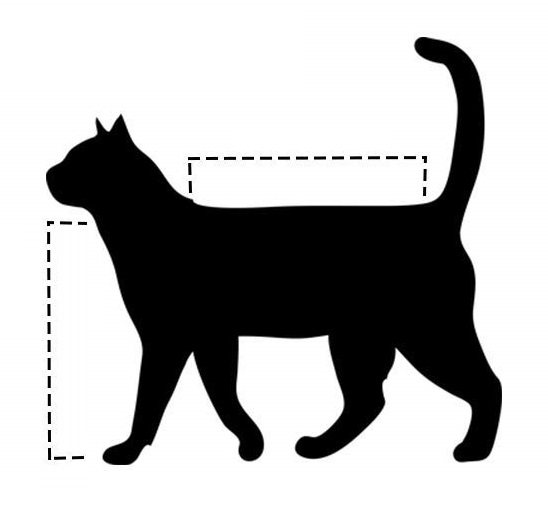 размеры кошки
