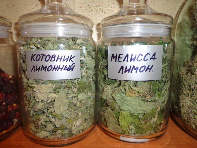 Разница между листьями котовника и листьями других растений