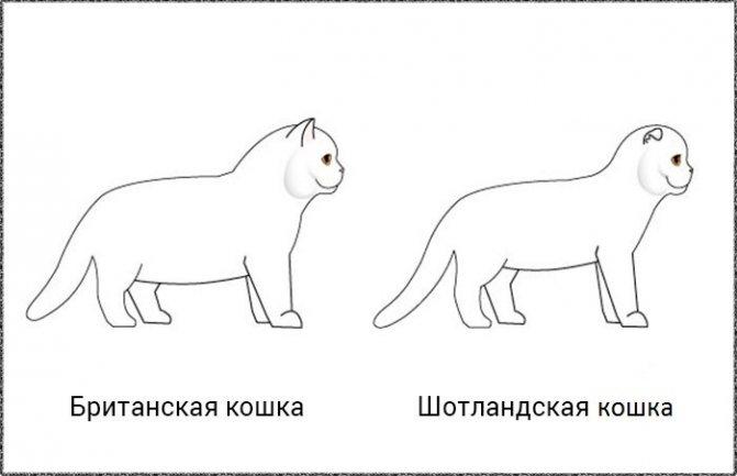 Разница между породами