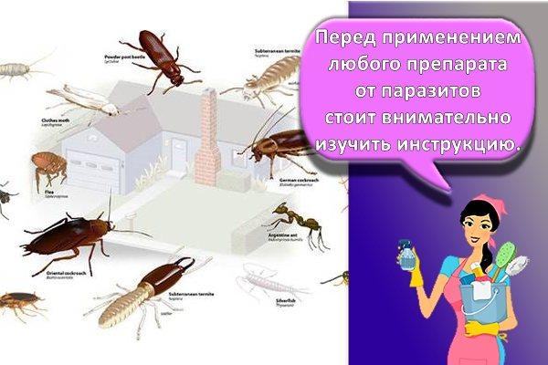 разные паразиты в квартире