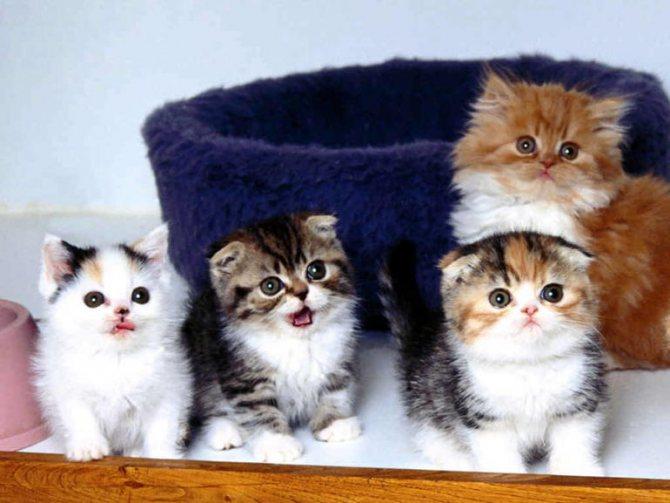 Реакция на раздражители котят
