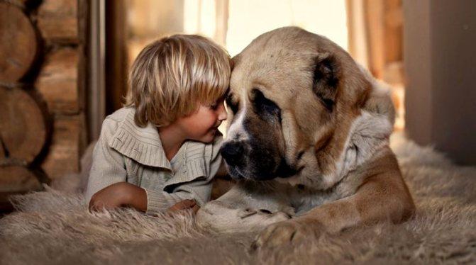 Ребенок и большая собака