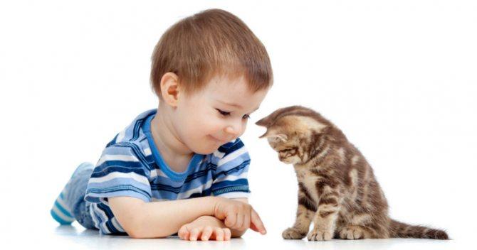 Ребенок играет с котенком.