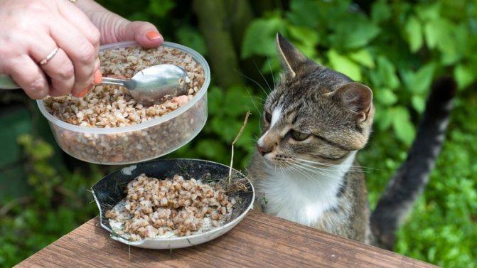 Рецепты вкусной каши для котов