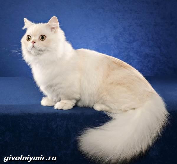 Редкие-кошки-Описание-и-особенности-редких-пород-кошек-10