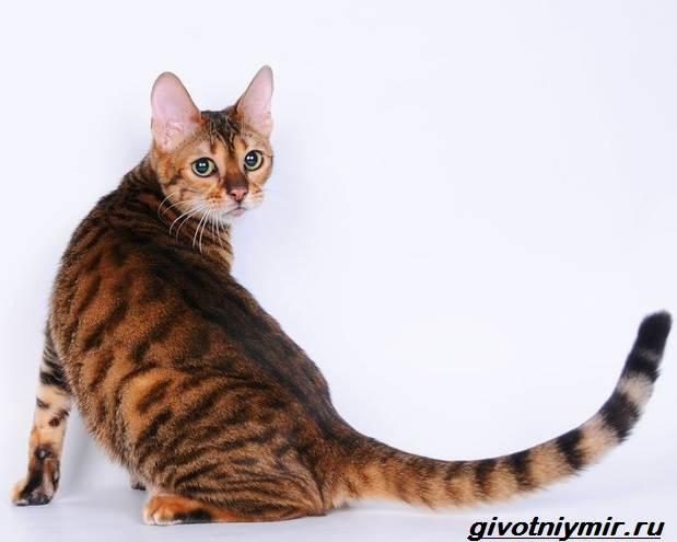 Редкие-кошки-Описание-и-особенности-редких-пород-кошек-2