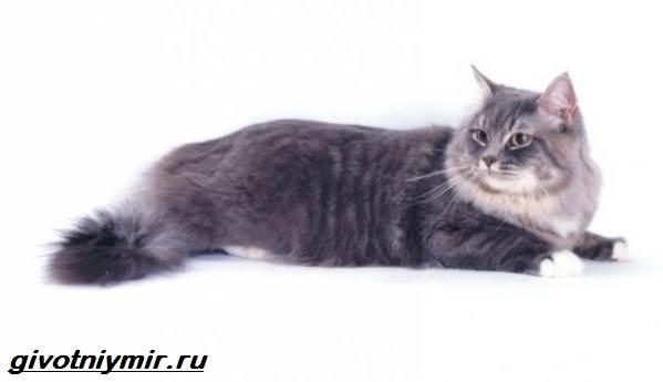 Редкие-кошки-Описание-и-особенности-редких-пород-кошек-7