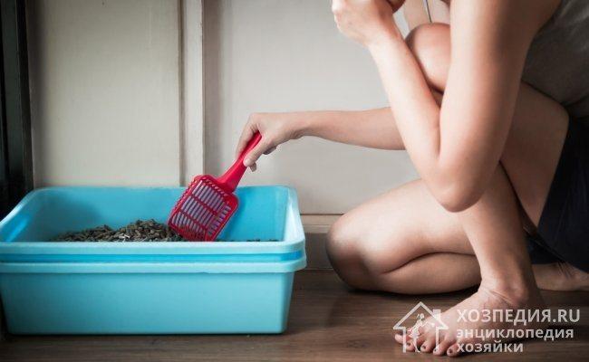 Регулярная очистка лотка гарантирует отсутствие характерного амбре от кошачьего туалета