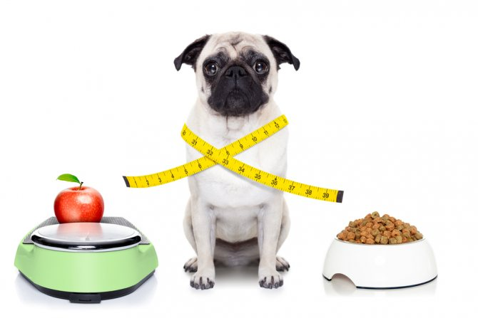 Как сбросить вес для собак