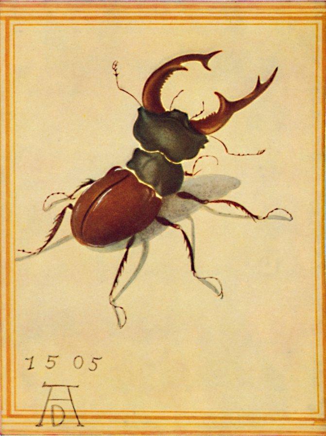 Рисунок Альбрехта Дюрера.jpg