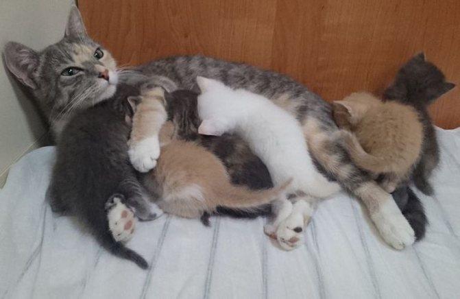 Родовое гнездо кошки