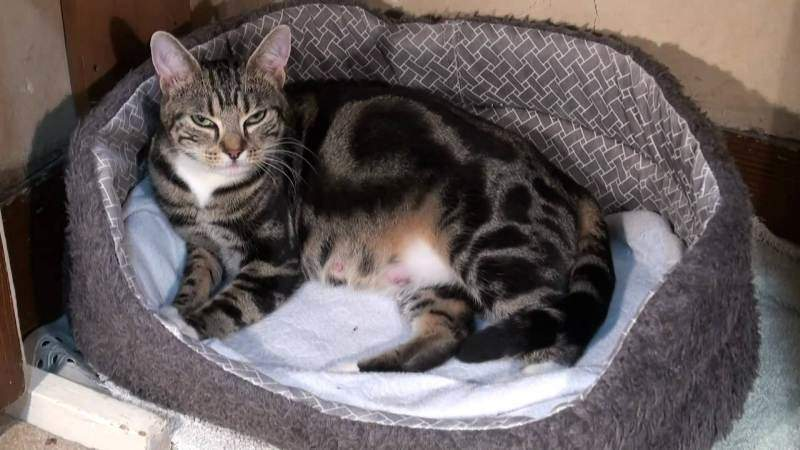 Рожать кошка должна преимущественно в домашних условиях