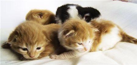 Рождение котят и этапы их развития