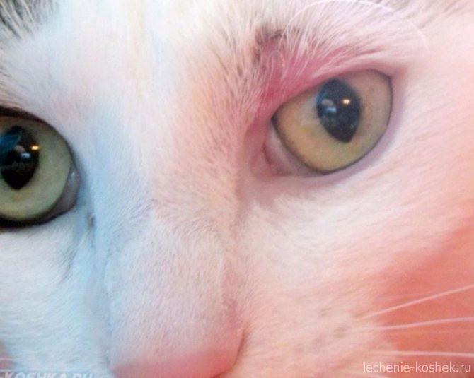 розовый лишай у кошек