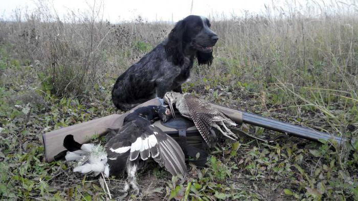 русский охотничий спаниель москва